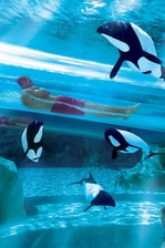 Aquatica™ by SeaWorld