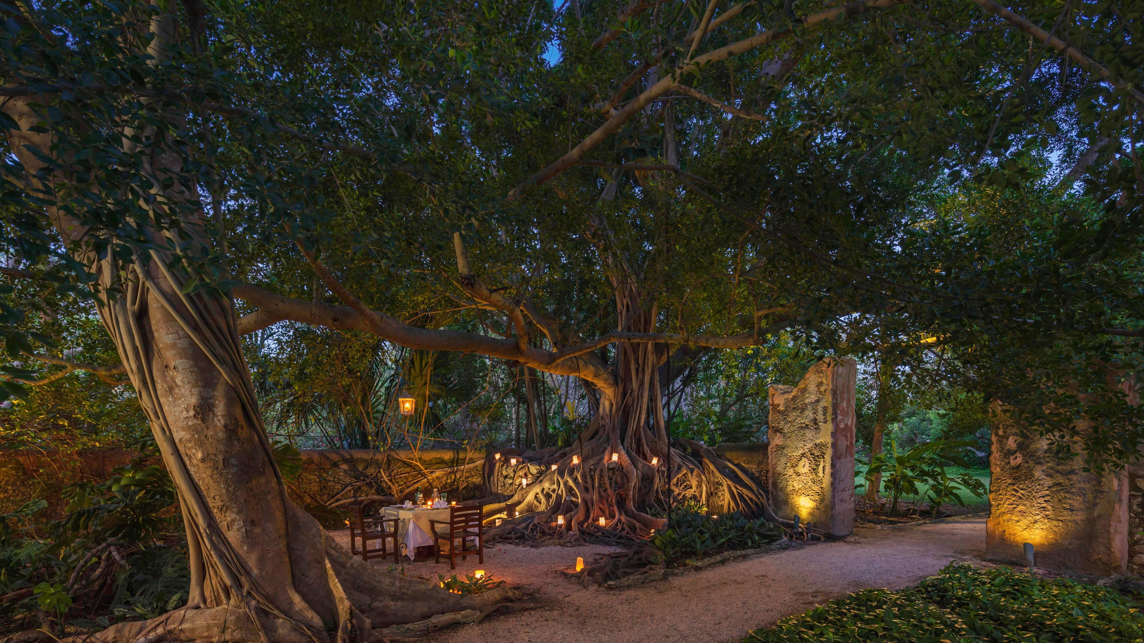 Dreams Tree