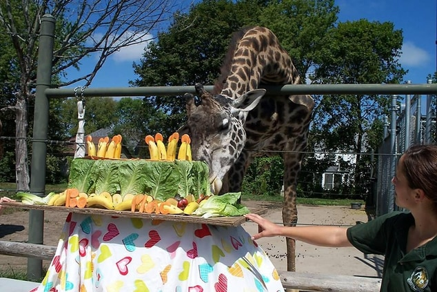 Giraffes at the Racine Zoological Gardens