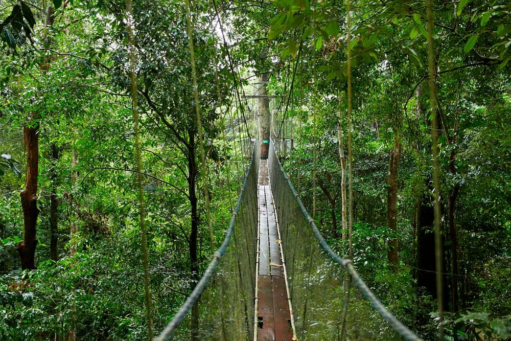 Mulu National Skywalk