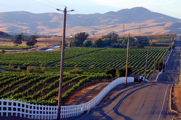 Livermore valley wine growing