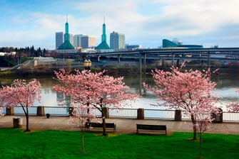 Portland Cherry Tree Waterfront