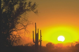 bright yellow and orange sunset in the desert with tall cactus