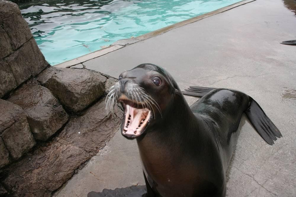 Pittsburgh Zoo Sea Lions