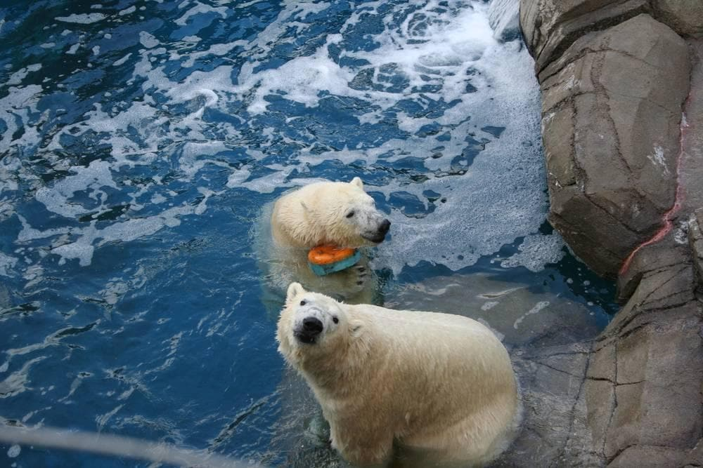Pittsburgh Zoo Polar Bears
