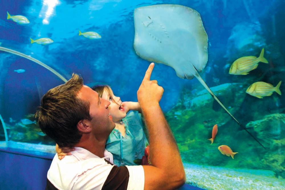 Blue Reef Aquarium Hotels