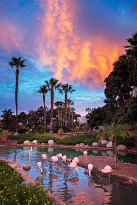 Resort Flamingos
