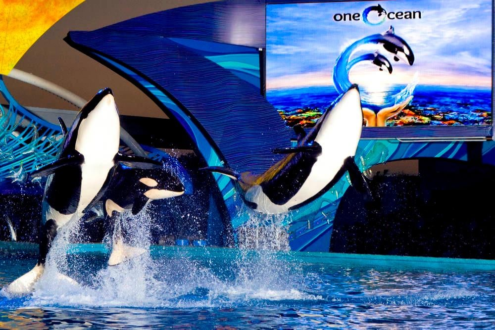 SeaWorld® San Antonio One Ocean