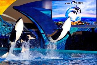 One Ocean en SeaWorld® San Antonio