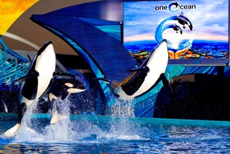 One Ocean en SeaWorld® San Antonio