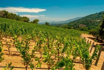 Los Gatos Winery