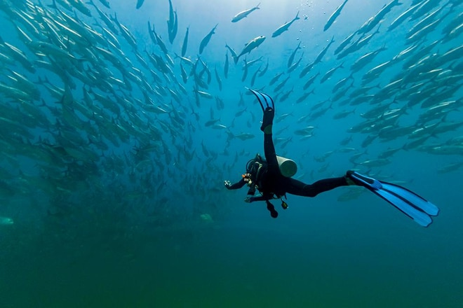 Underwater Experience At Cabo Pulmo