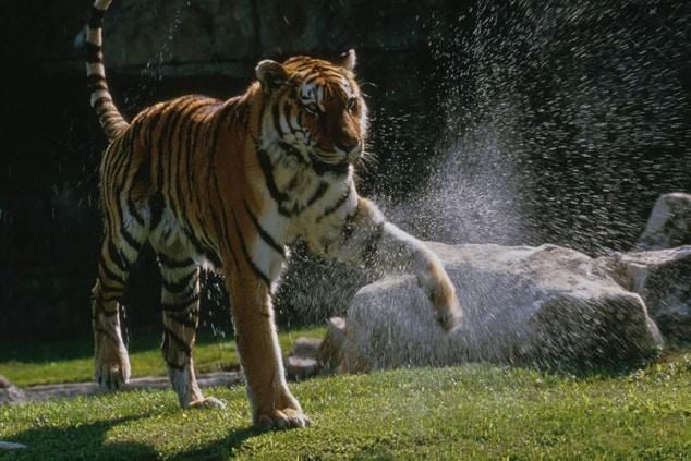 Saint Louis Zoo