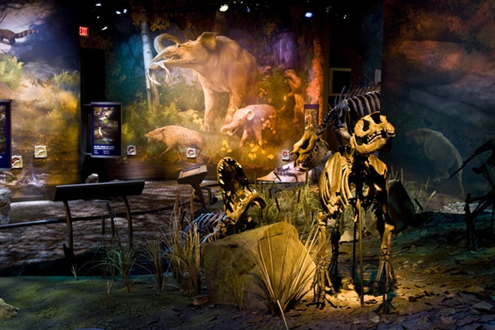 Gray Fossil Museum
