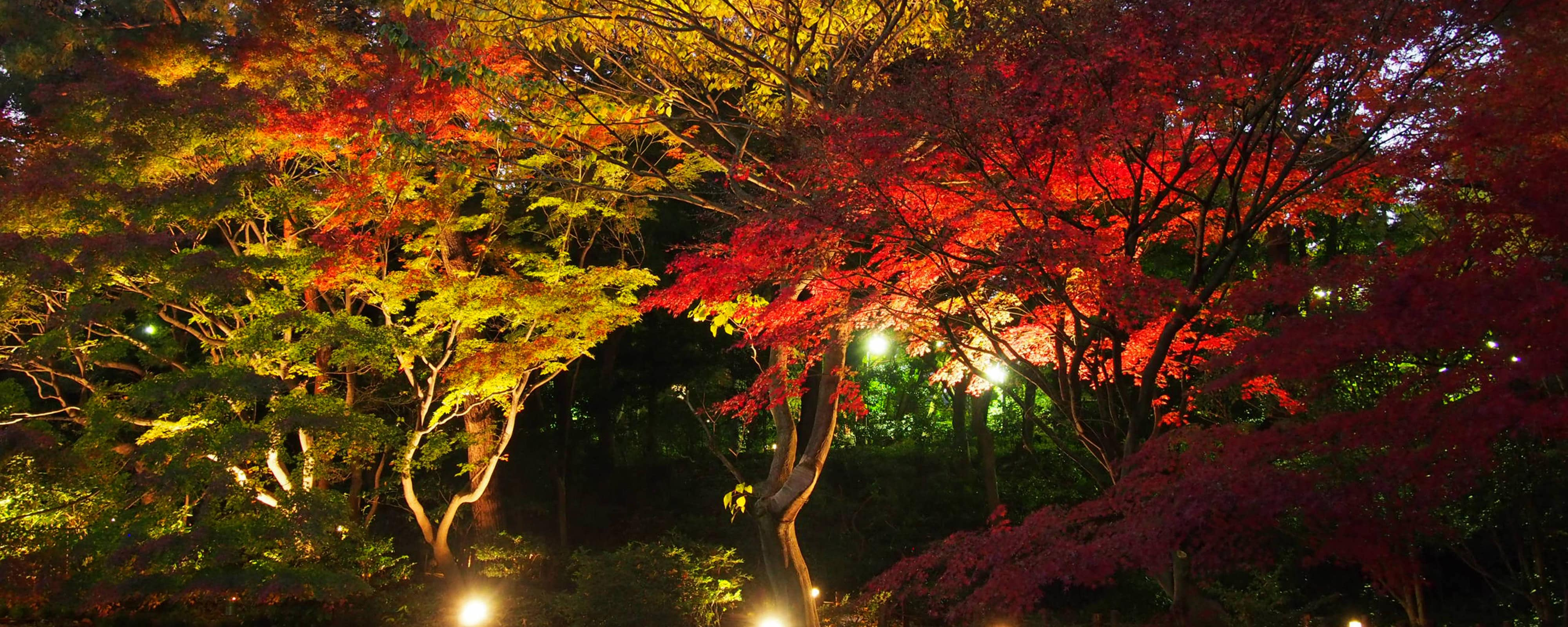 Local guide and things to do in Tokyo | Tokyo Marriott Hotel