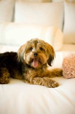 Pet  friendly vancouver airport hotels