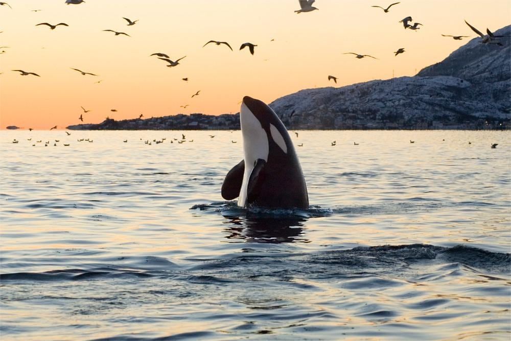 Victoria Whale Watching Tours