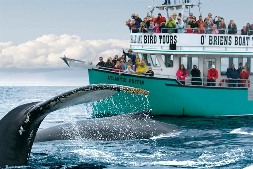 O'Brien's Whale and Bird Tours