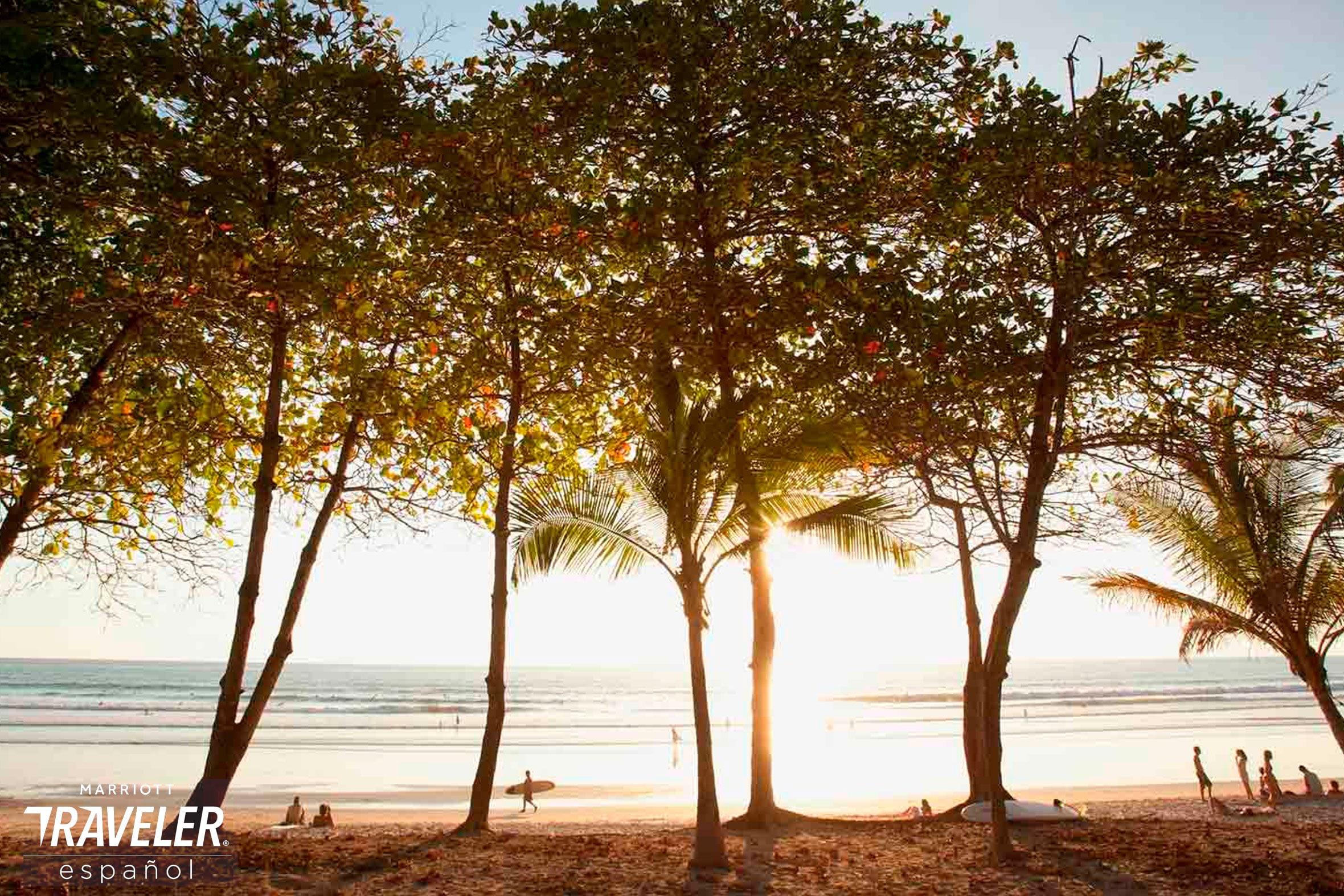 Palmeras cerca del océano